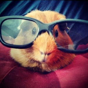 hamster-wearing-sunglasses-funny-photo